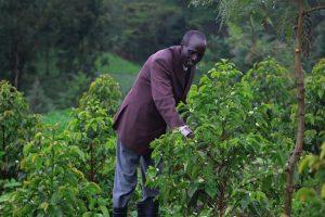 kongolel masai kangonyei a sengwer and a coffee beneficiary